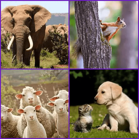 4 Pics 1 Word –  ANIMAL answer