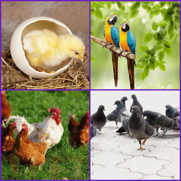 4 Pics 1 Word –  BIRD answer