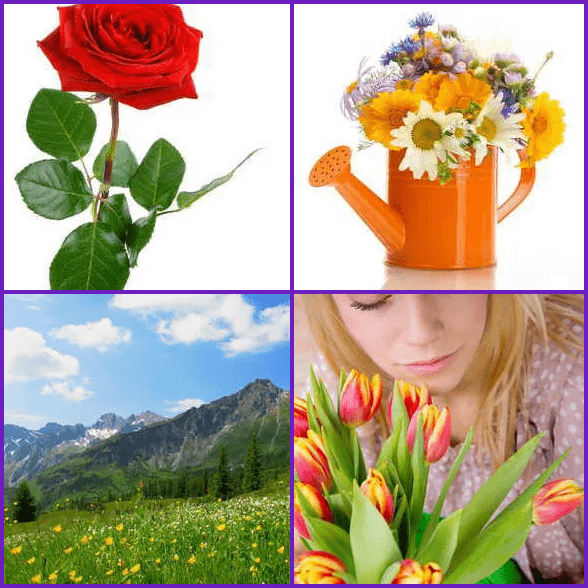 4 Pics 1 Word –  FLOWER answer
