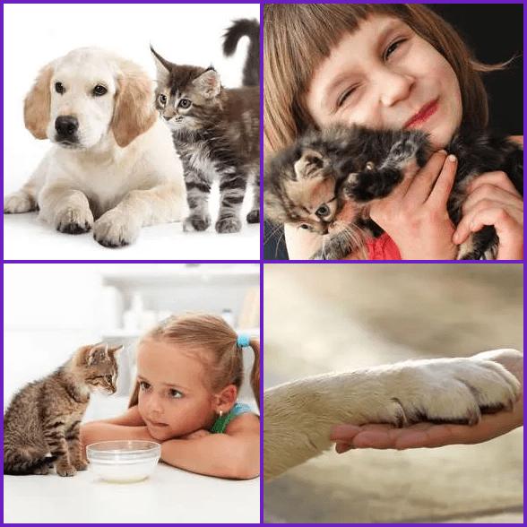 4 Pics 1 Word –  PET answer
