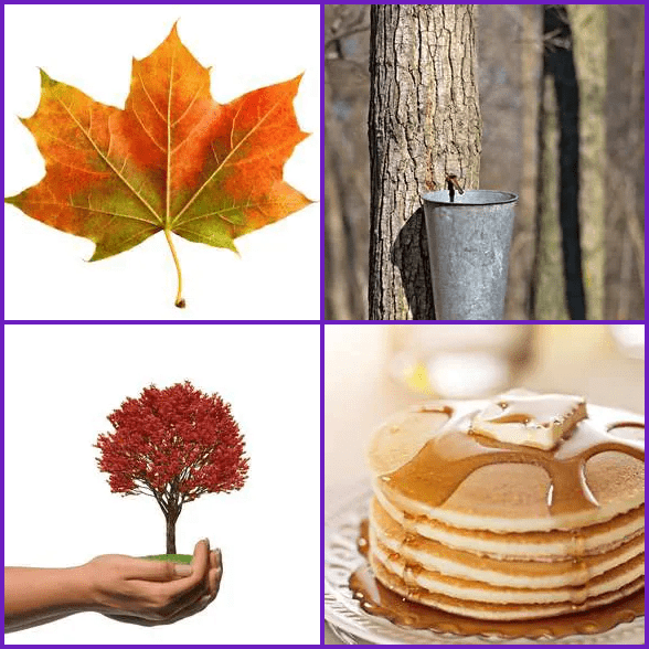 4 Pics 1 Word –  MAPLE answer