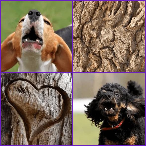 4 Pics 1 Word –  BARK answer