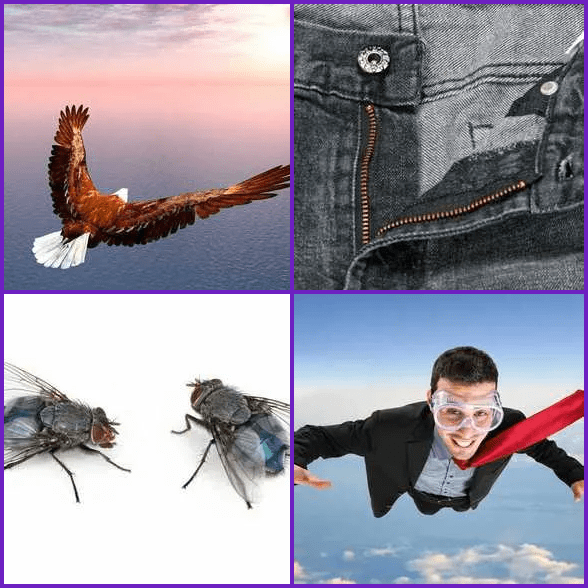4 Pics 1 Word –  FLY answer